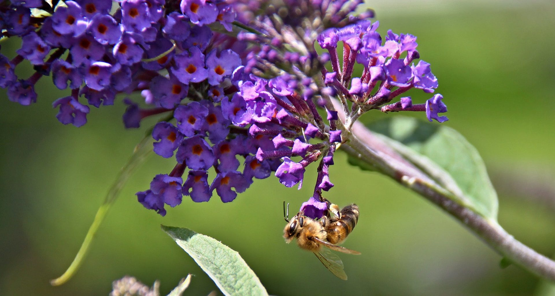 13 Plants That Attract Bees