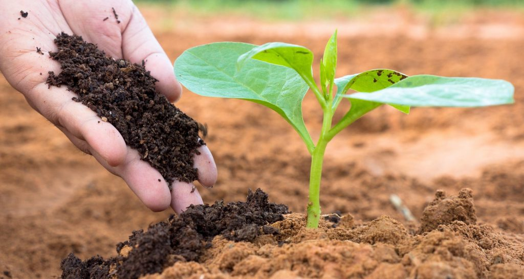 The Pros and Cons Of Organic Fertilizer