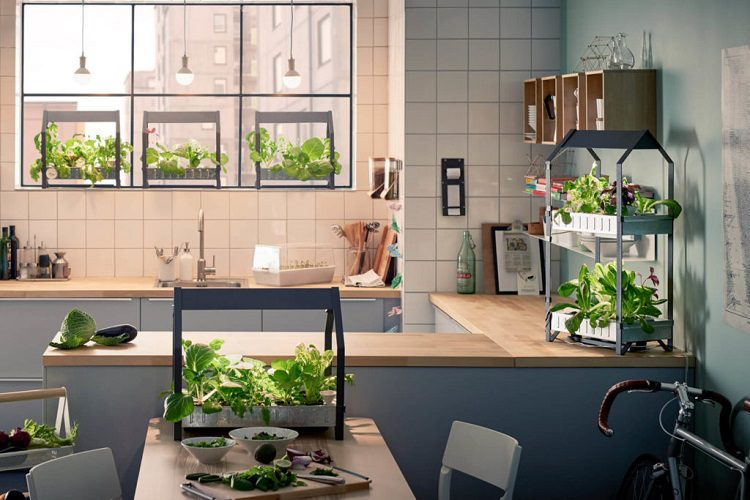 Common approaches to urban gardening