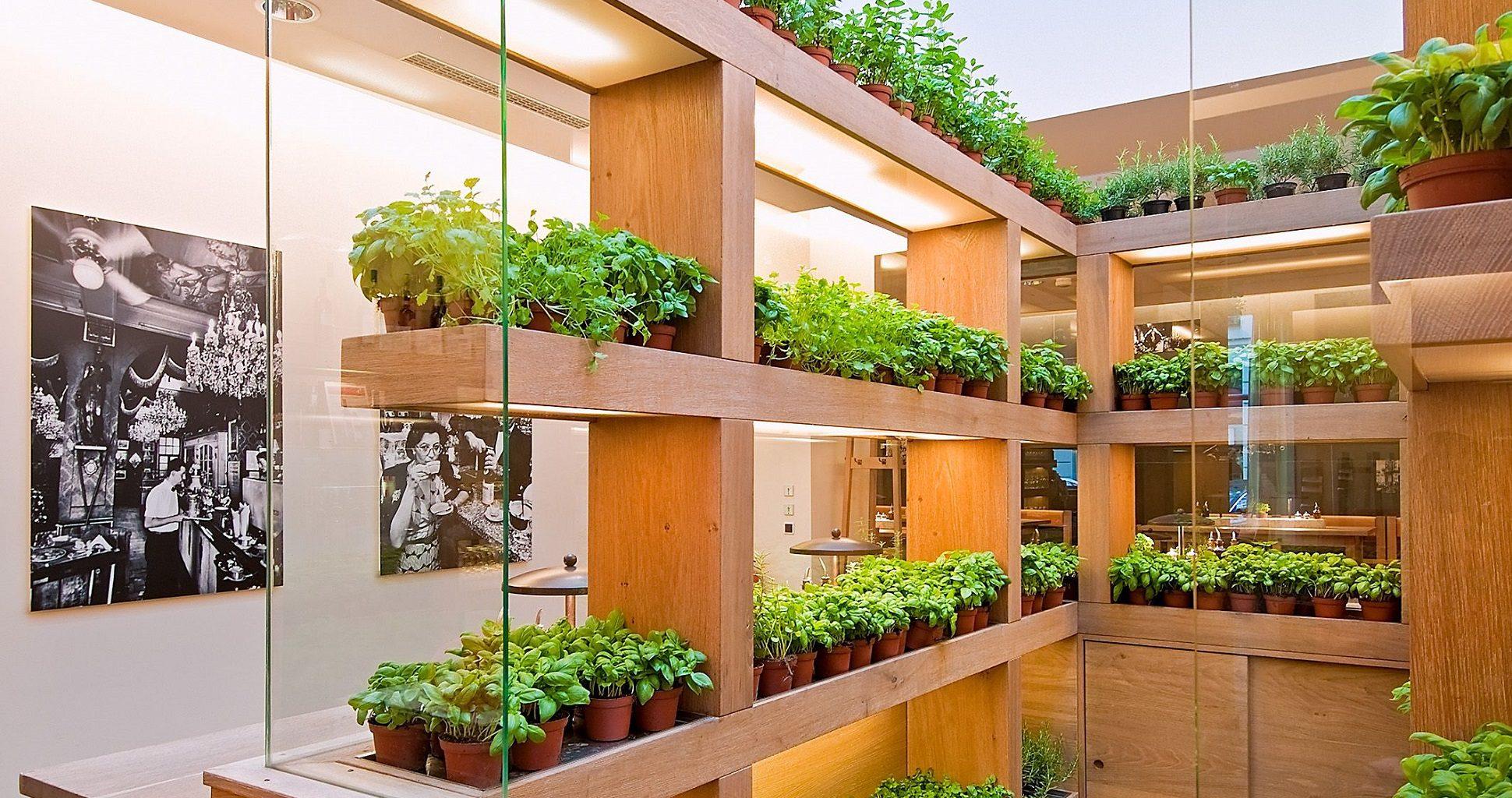 How To Create An Indoor Vegetable Garden