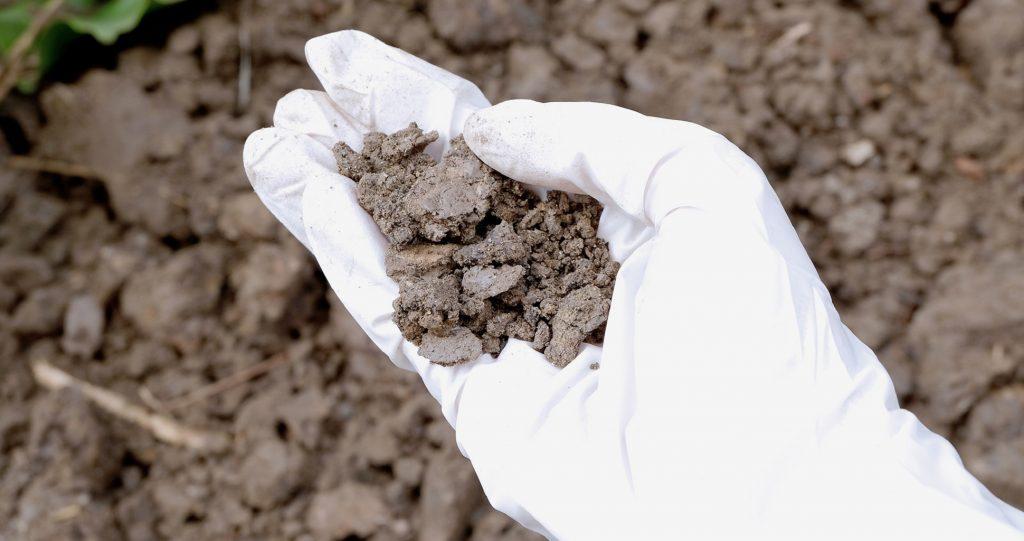 How To Make Soil Acidic?