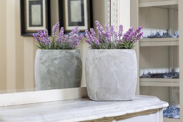 Why growing lavender indoors is a great choice