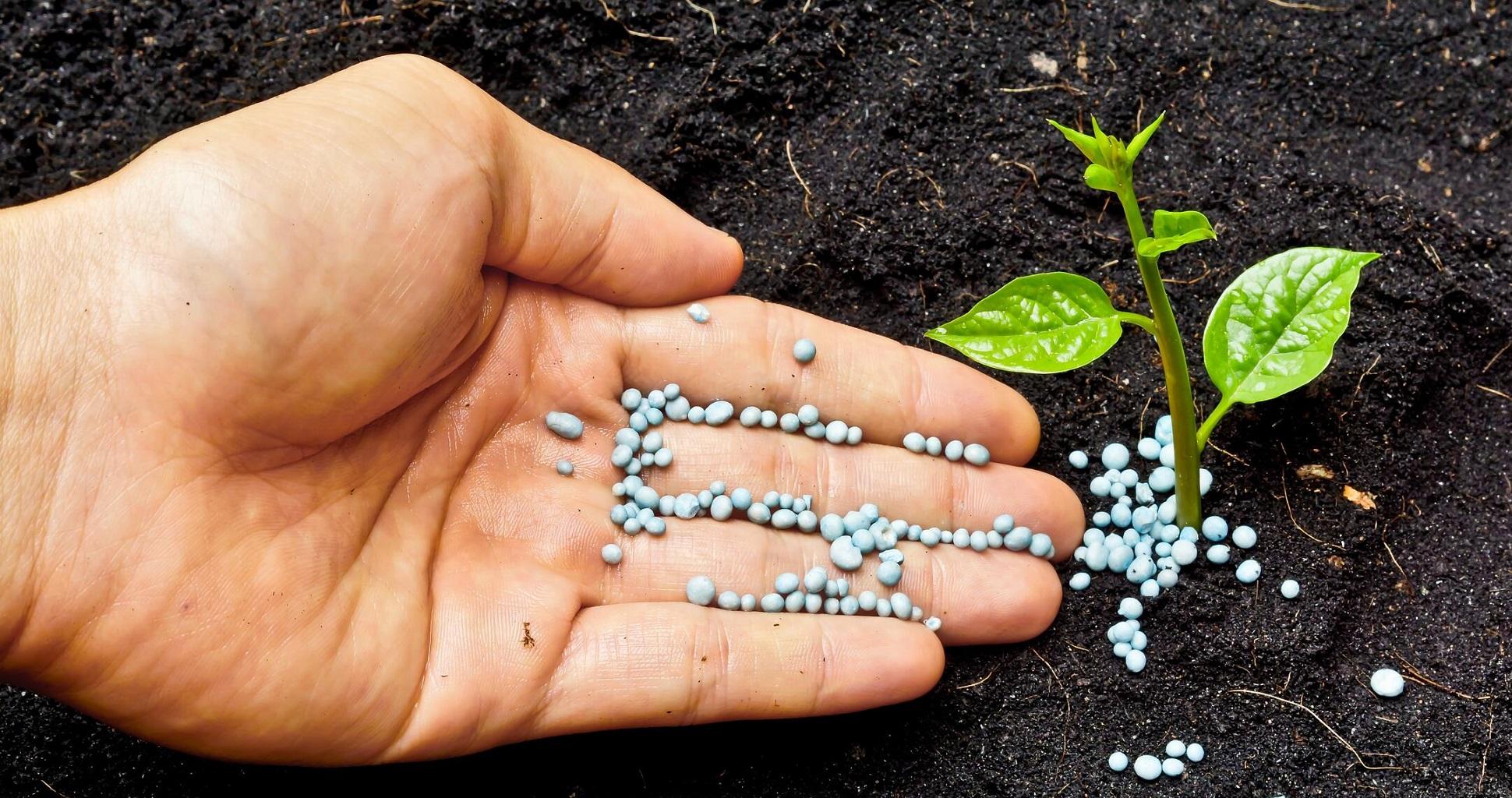 Best Nitrogen Fertilizer