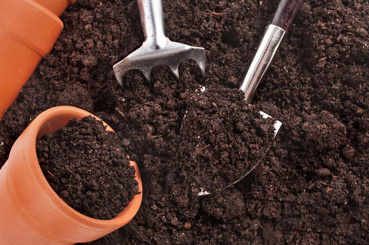 Soil to use
