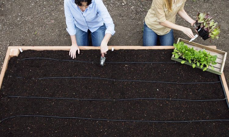 How to find nutrient-rich soils