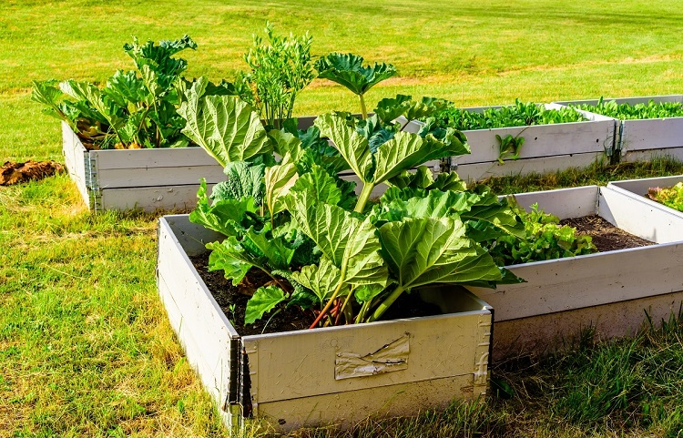 Container or raised bed?