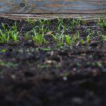 Best Raised Garden Bed Soil