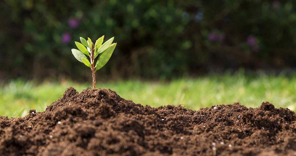 Five Best Soil Types