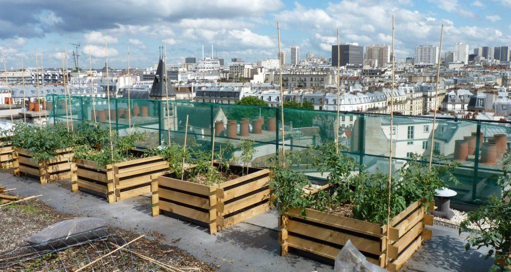 Ultimate Guide to Urban Gardening