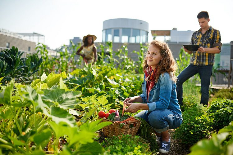 Pros and cons of urban gardening